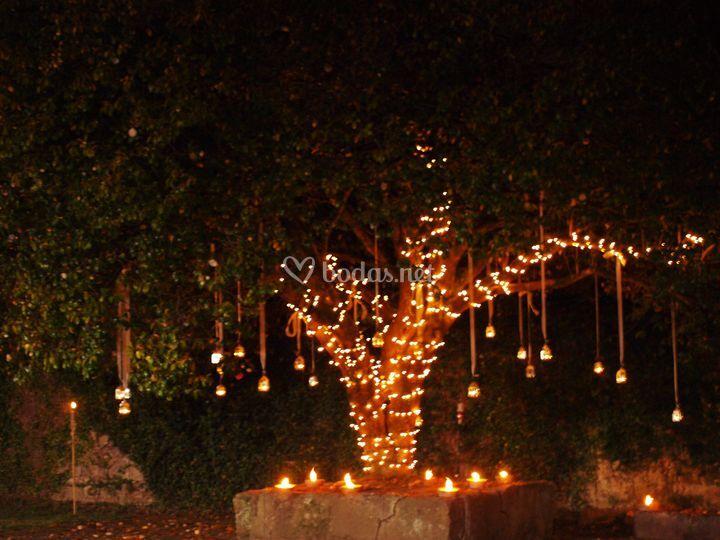 Iluminación del árbol