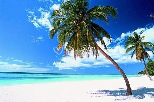 Isla Saona (Rep. Dominicana)