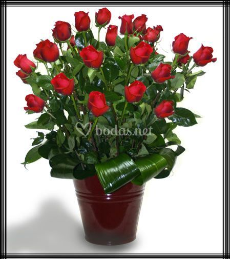 Rosas de gran calidad