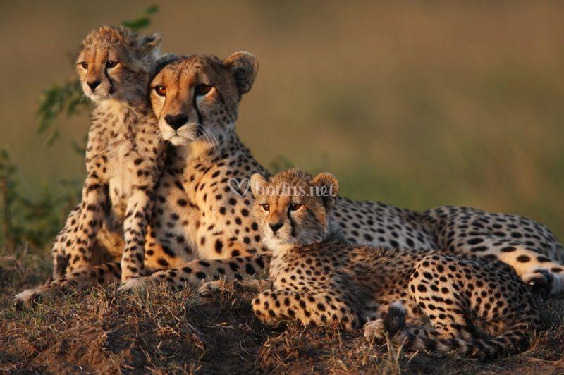 Safaris