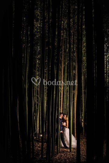 Bambú Solares
