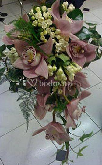 Flores Zinnia Madrid