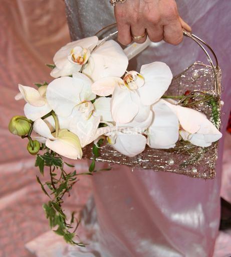 Bolso phaleonopsis