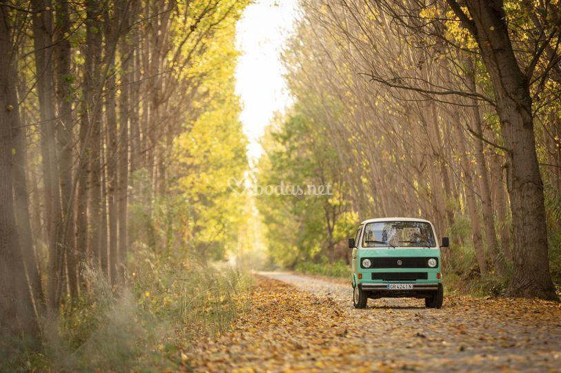 Rita en otoño
