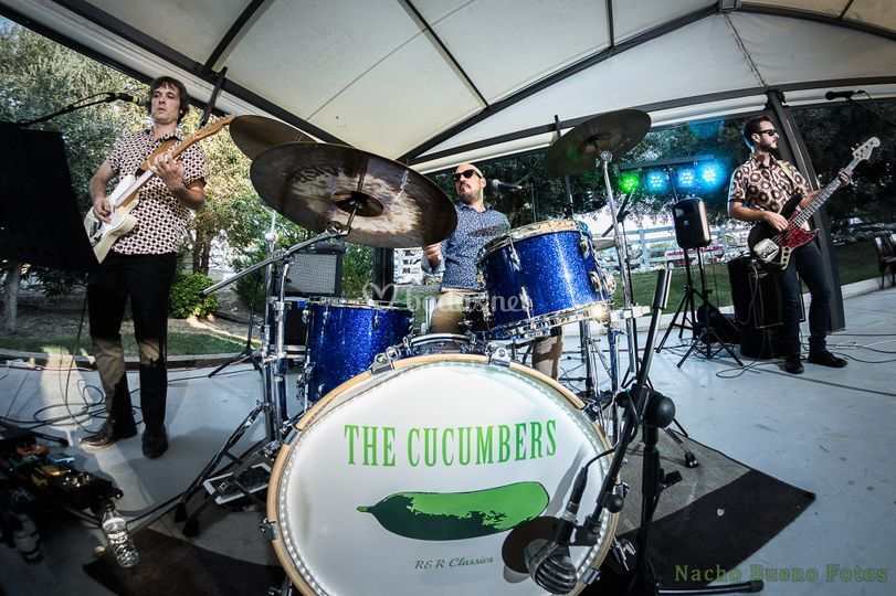 The Cucumbers y a bailar