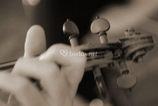 Cabeza violín