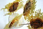Piruleta de morcón ibérico con emental gratinat
