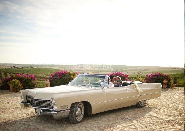 Cadillac finca vistahermosa