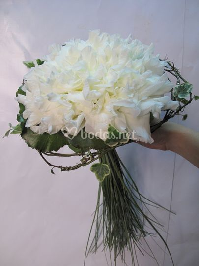 Glamelia blanca