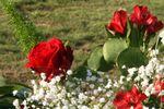 Adonos florales