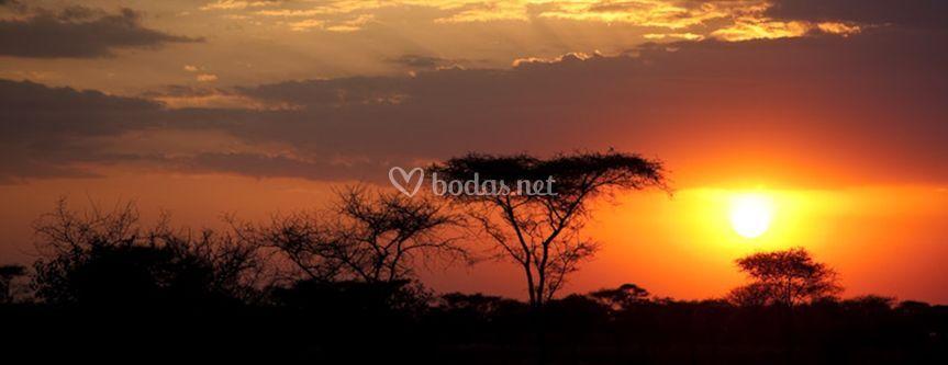 Safaris de ensueño