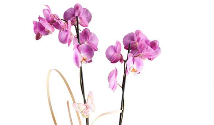 Arreglo con orquídea phalenosis