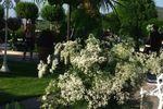 Arreglo floral con paniculata