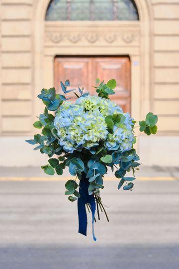 Blue hortensia.