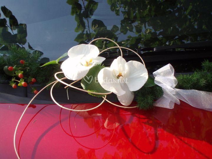 Detalle en orquideas en coche