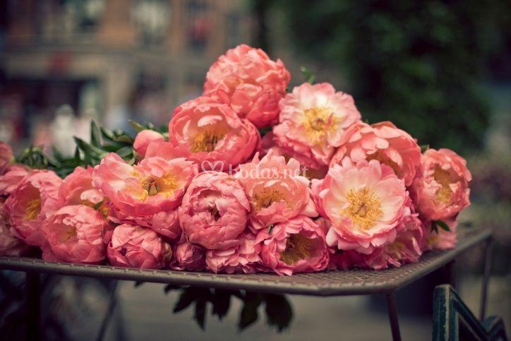 Flores para ambientar