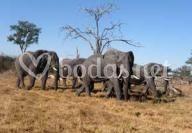El encanto de África