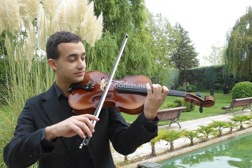 Alberto, viola