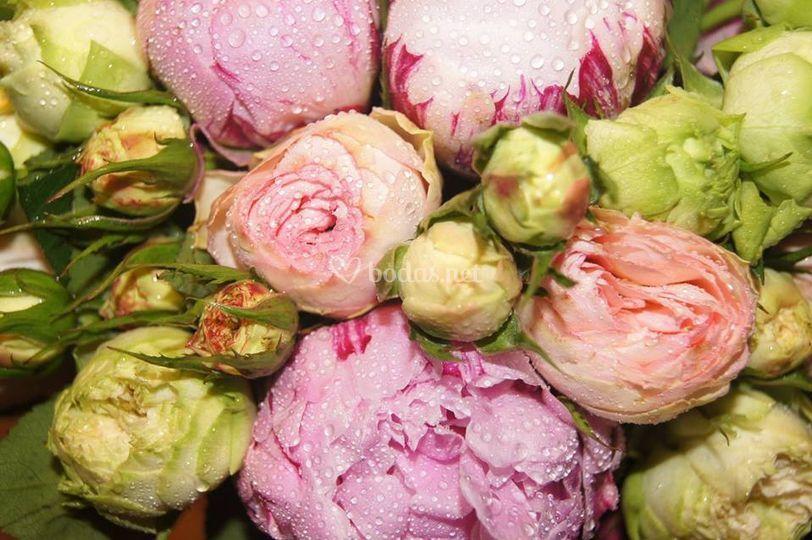Soriales - Arte floral