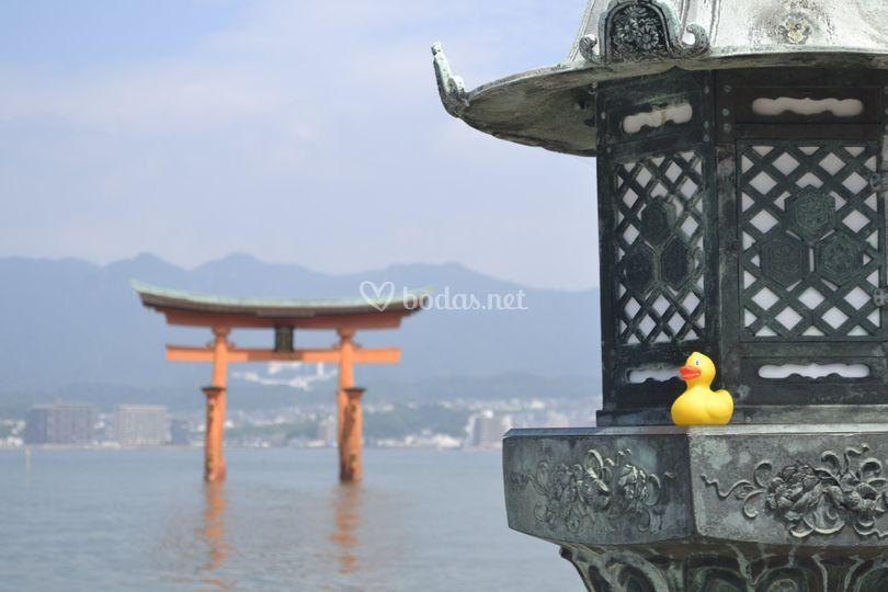 Quack-Let