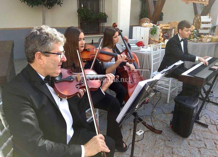 Cuarteto Schubert Coctel