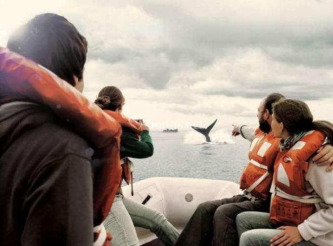 Viaje entre pingüinos y ballenas