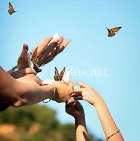 Suelta de mariposa para eventos