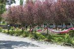 Jardín de los prunos