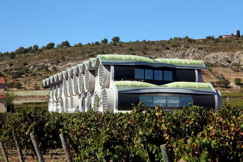 Vistas edificio y viñas