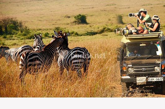 Safari en Kenya