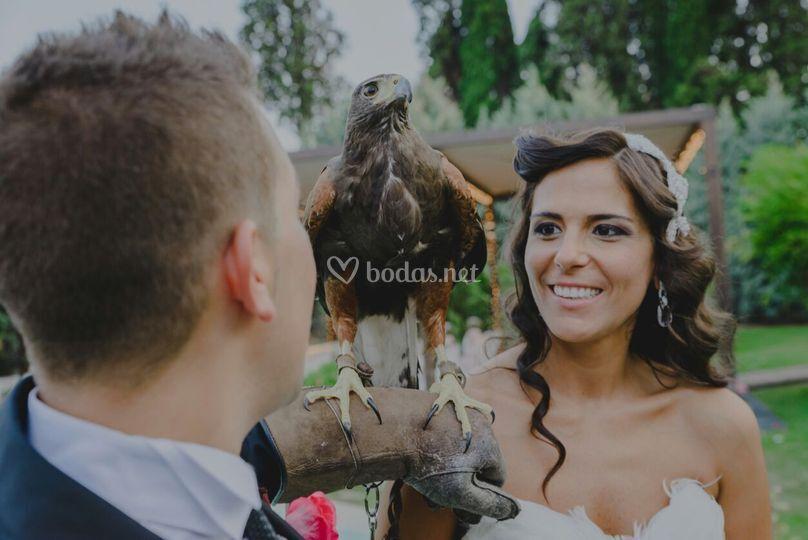 Rapaces para bodas