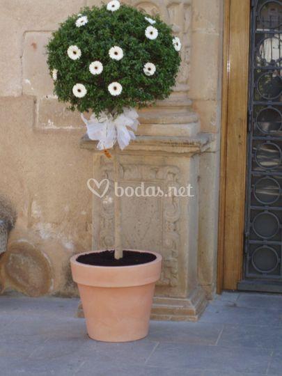 Buxus decorado para la entrada