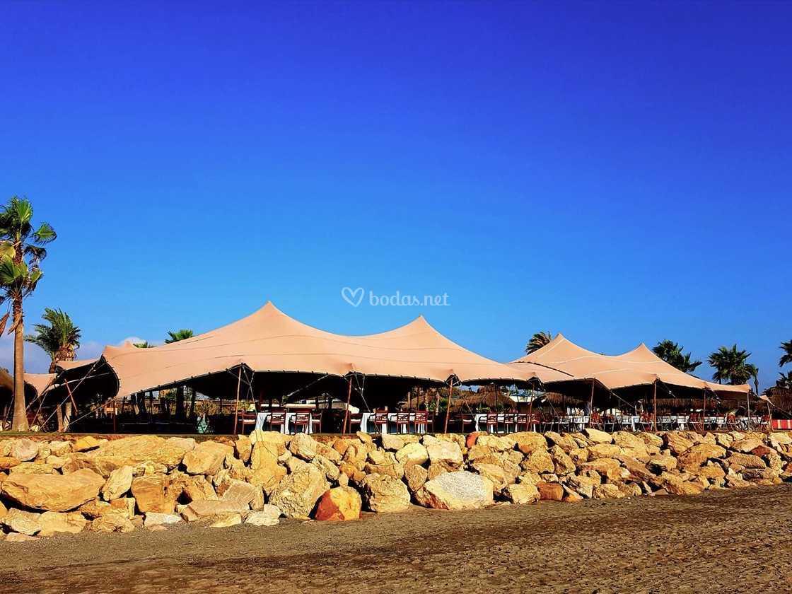 Beduina topo