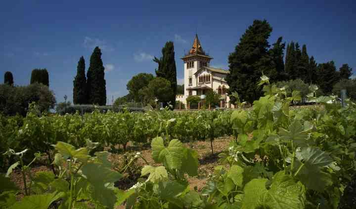 Entorno rodeado de viñas