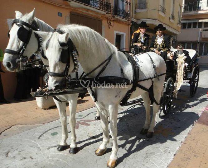Calesa con caballos españoles