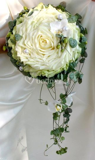 Rosmelia blanca