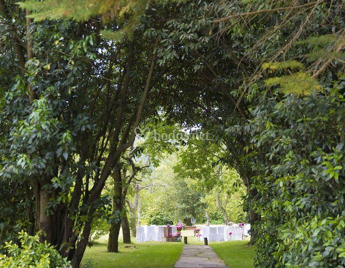 Ceremonias entre árboles