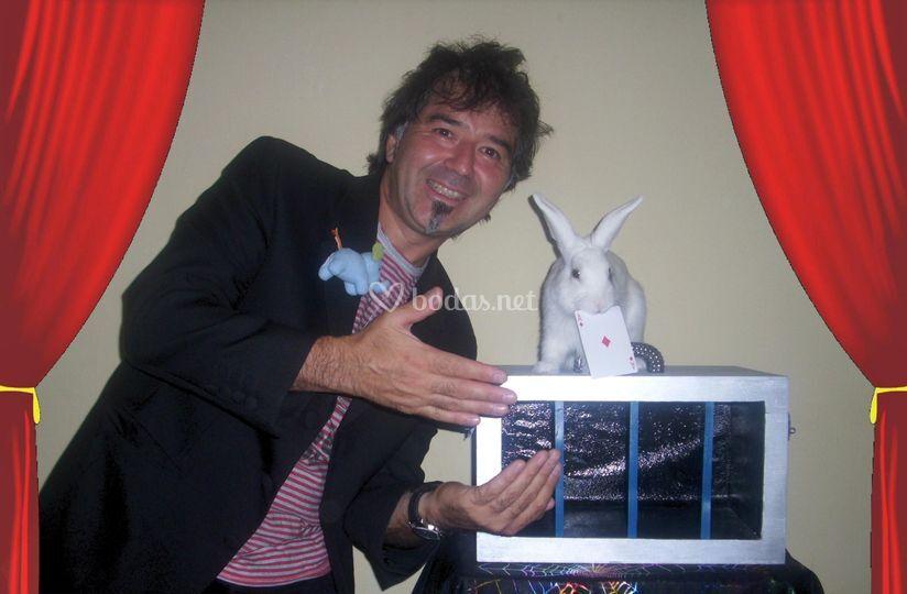 Aparicion de conejo Coco