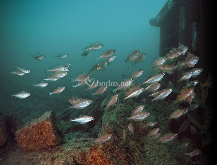 Vinos en crianza submarina