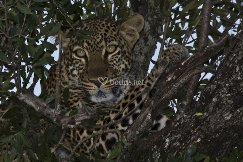 Mirada en Tanzania