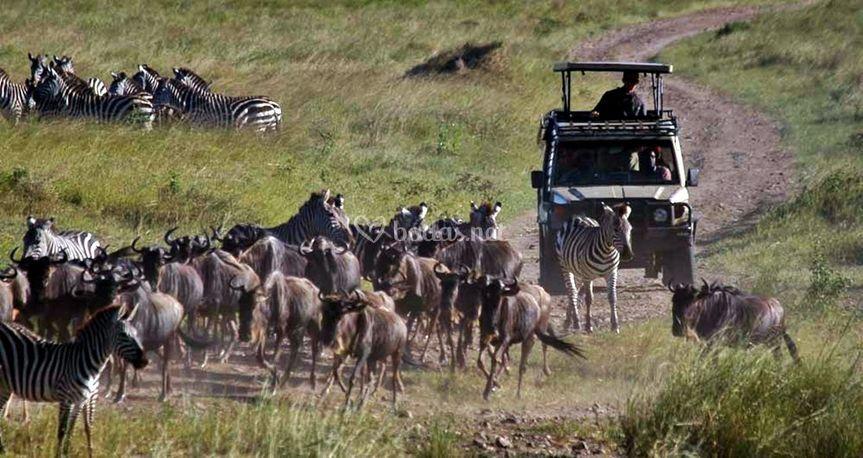 Itaka Safaris - Viajes a Tanzania