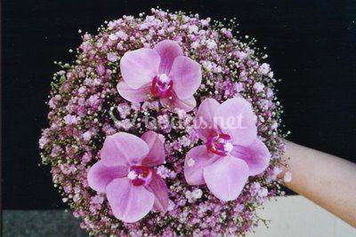 Paniculata rosa y orquídeas