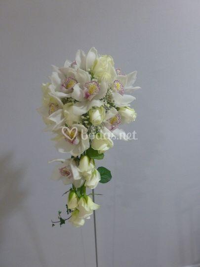 Ramo gota de orquídeas