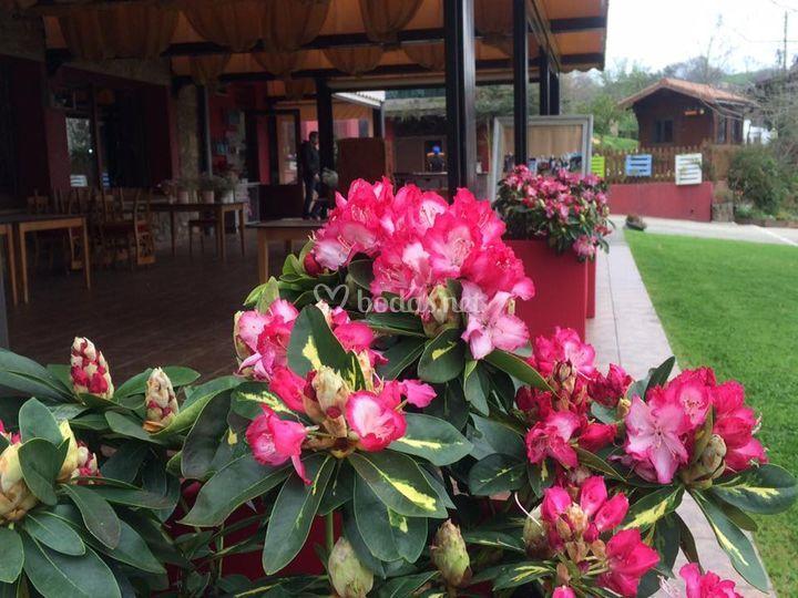 Restaurante Olarrondo Jatetxea