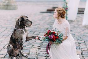 Costas Wedding Planning