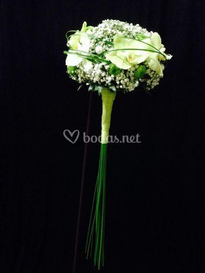 Cupula de paniculata con phale