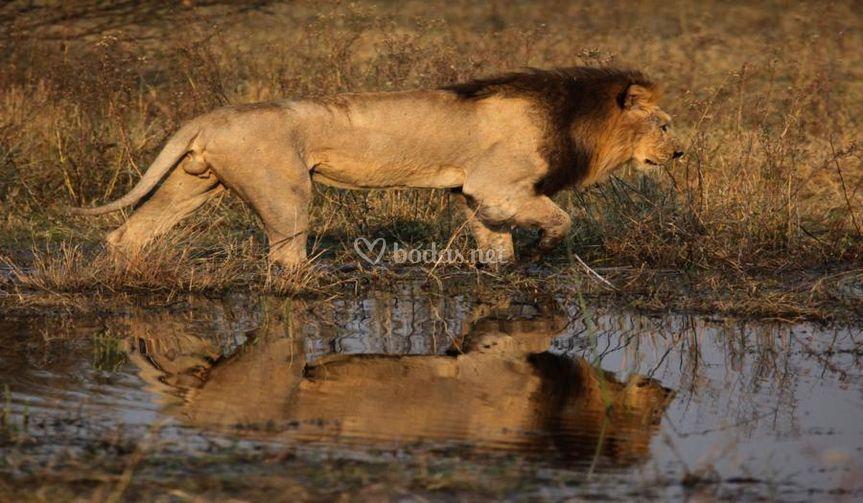 Lunas de miel Botswana