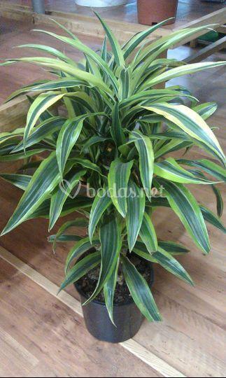 Arbustos y plantas