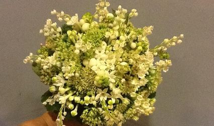 Flores Areka 1