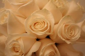Flores Lliso